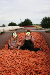 hitchhiking on carrots