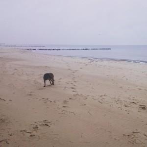 polskie morze zimą