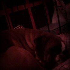 pies odpoczywa