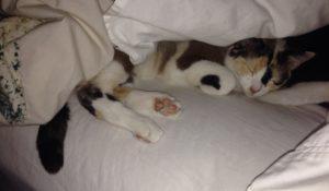 kotek na łóżku